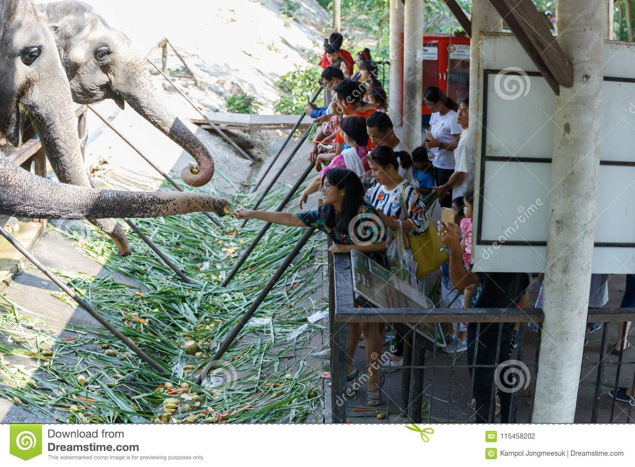 Chonburi / Thailand - April 15 2018: Young people feeding to elephant`s trunk in the Khao Kheow Open Zoo.