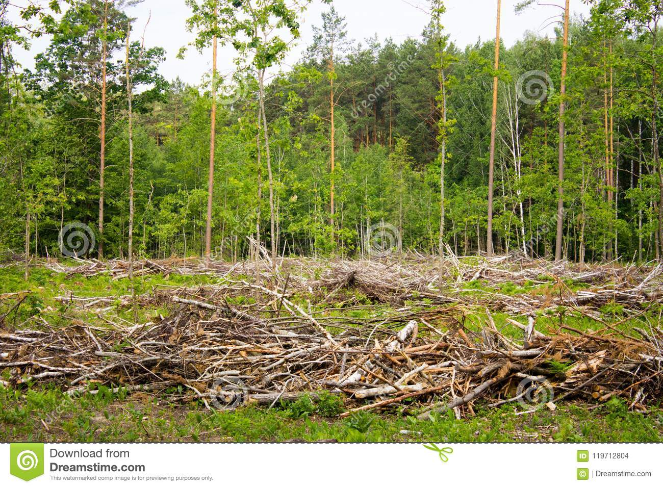 chopped tree branches stock photo. image of trees, green - 119712804