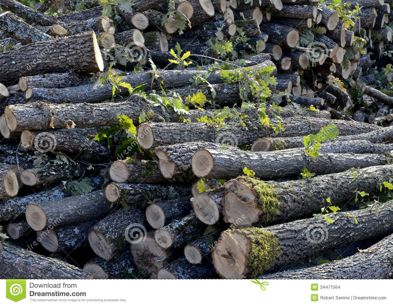 danger of deforestation Brazil once had the highest deforestation rate in the world and in 2005 still had the largest area of forest removed annually since 1970, over 700,000 square.