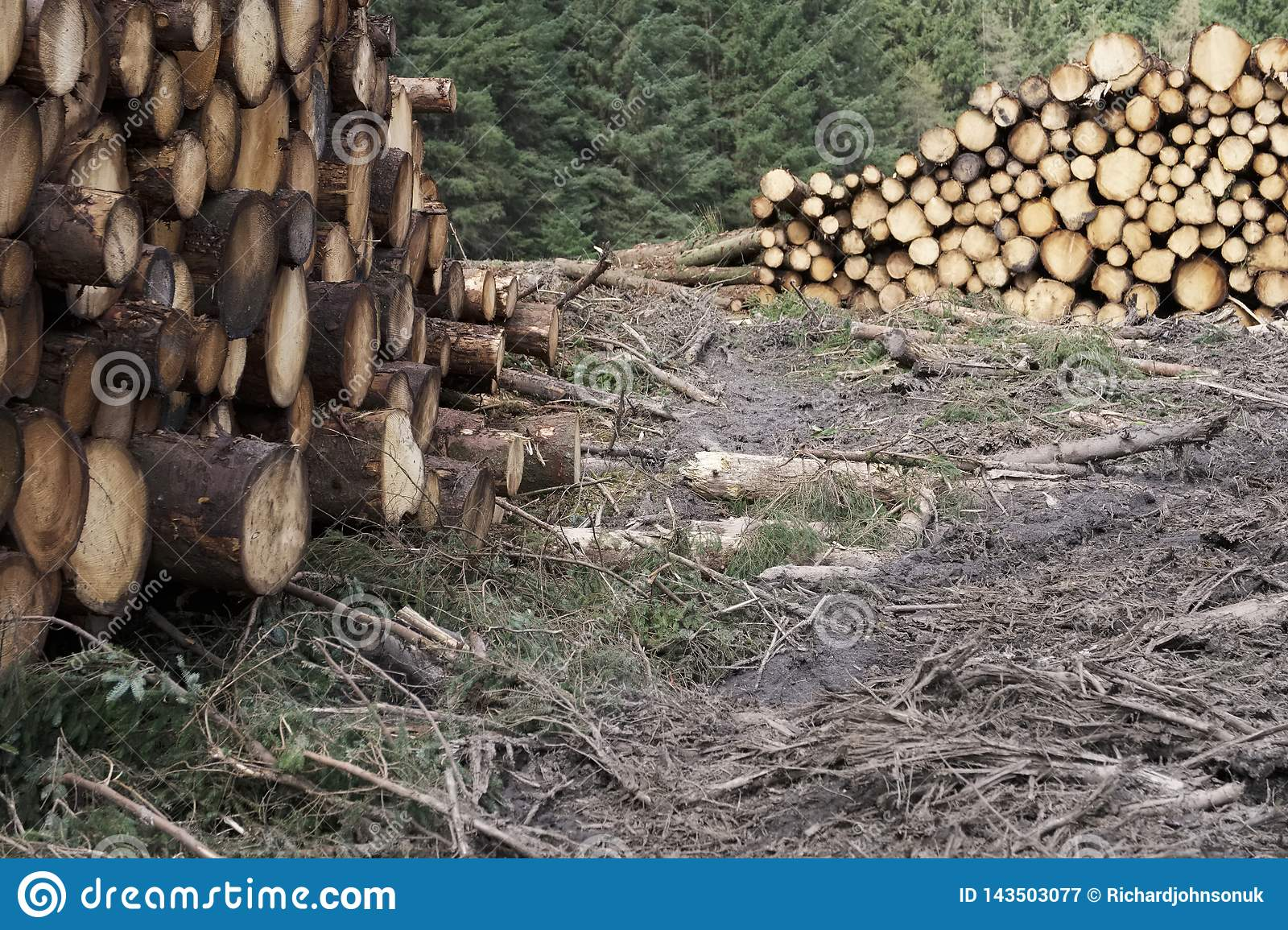 Chopped wood logs stack for fire place at home on forest woodlands green biomass energy