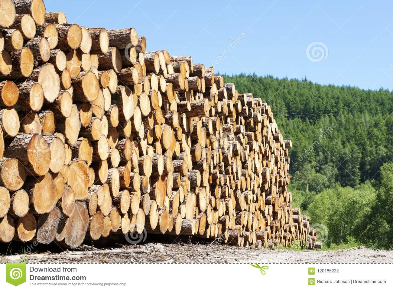 Chopped wood logs stacked in forest woodlands renewable green biomass energy summer sun Loch Lomond blue sky