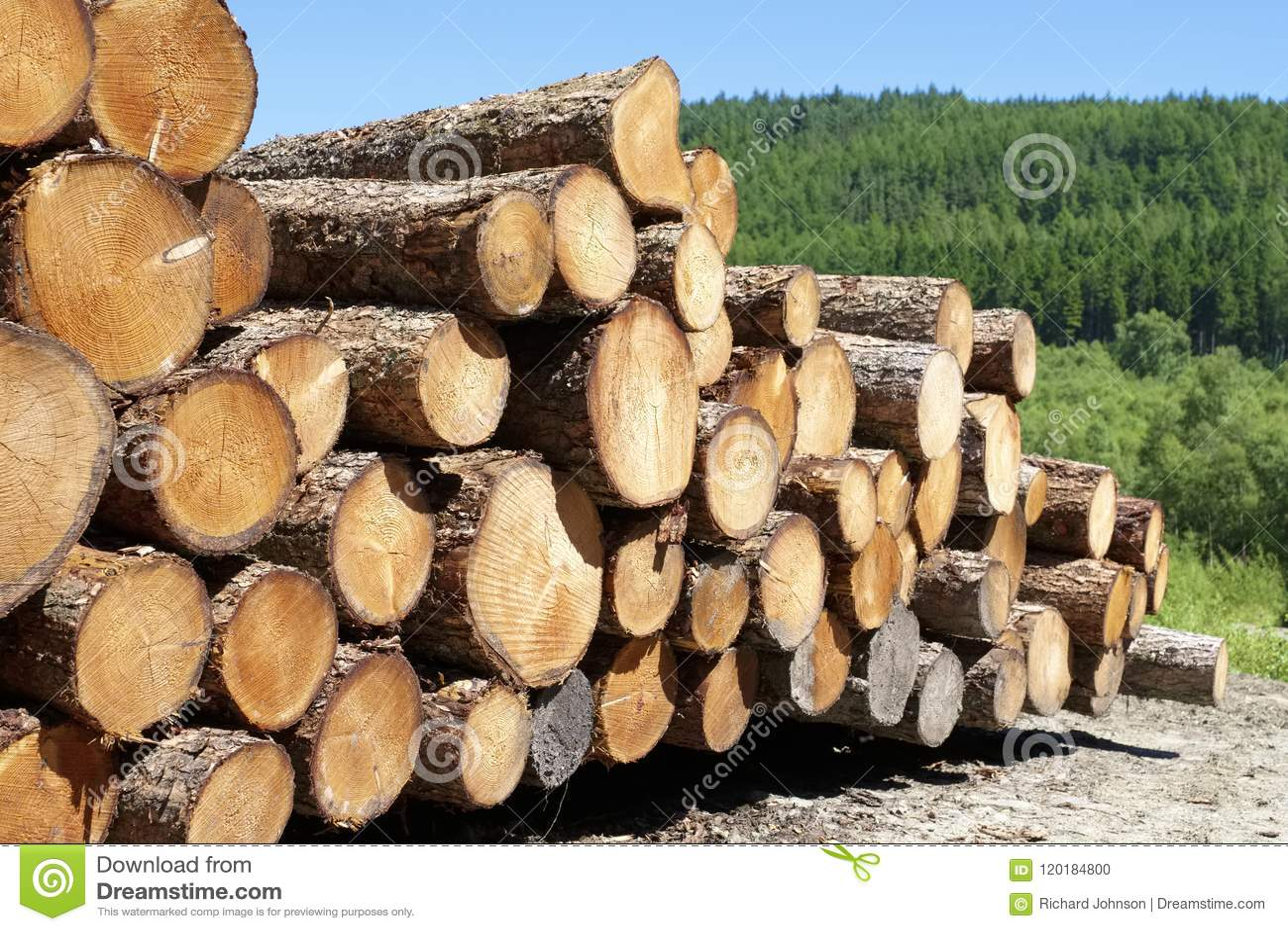 Chopped wood logs stacked in forest woodlands renewable green biomass energy summer sun Loch Lomond blue sky