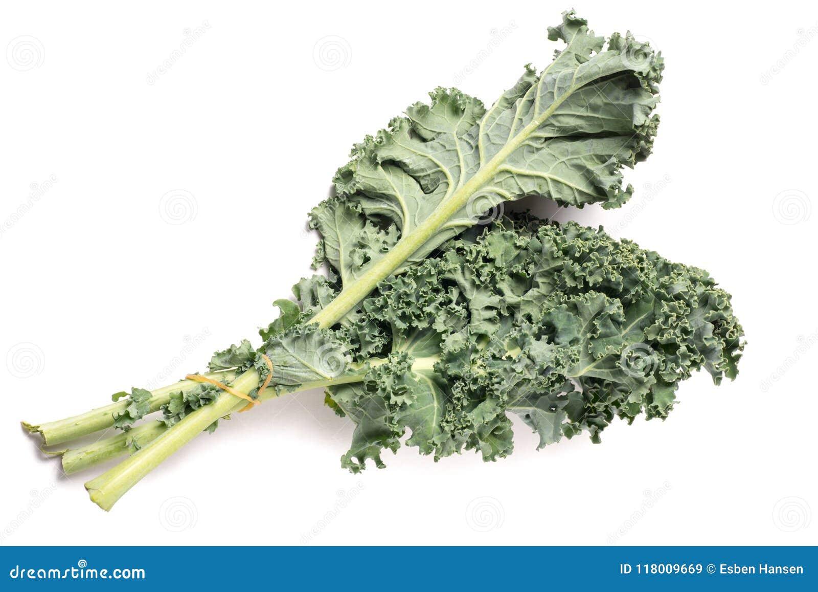Chou frisé vert sain organique