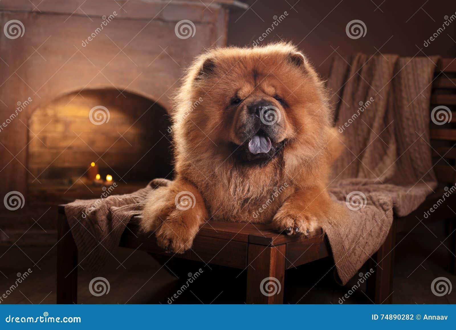 Chow διασταύρωσης σχεδίου αναδρομικό ύφος καρτών σκυλιών grunge παλαιό