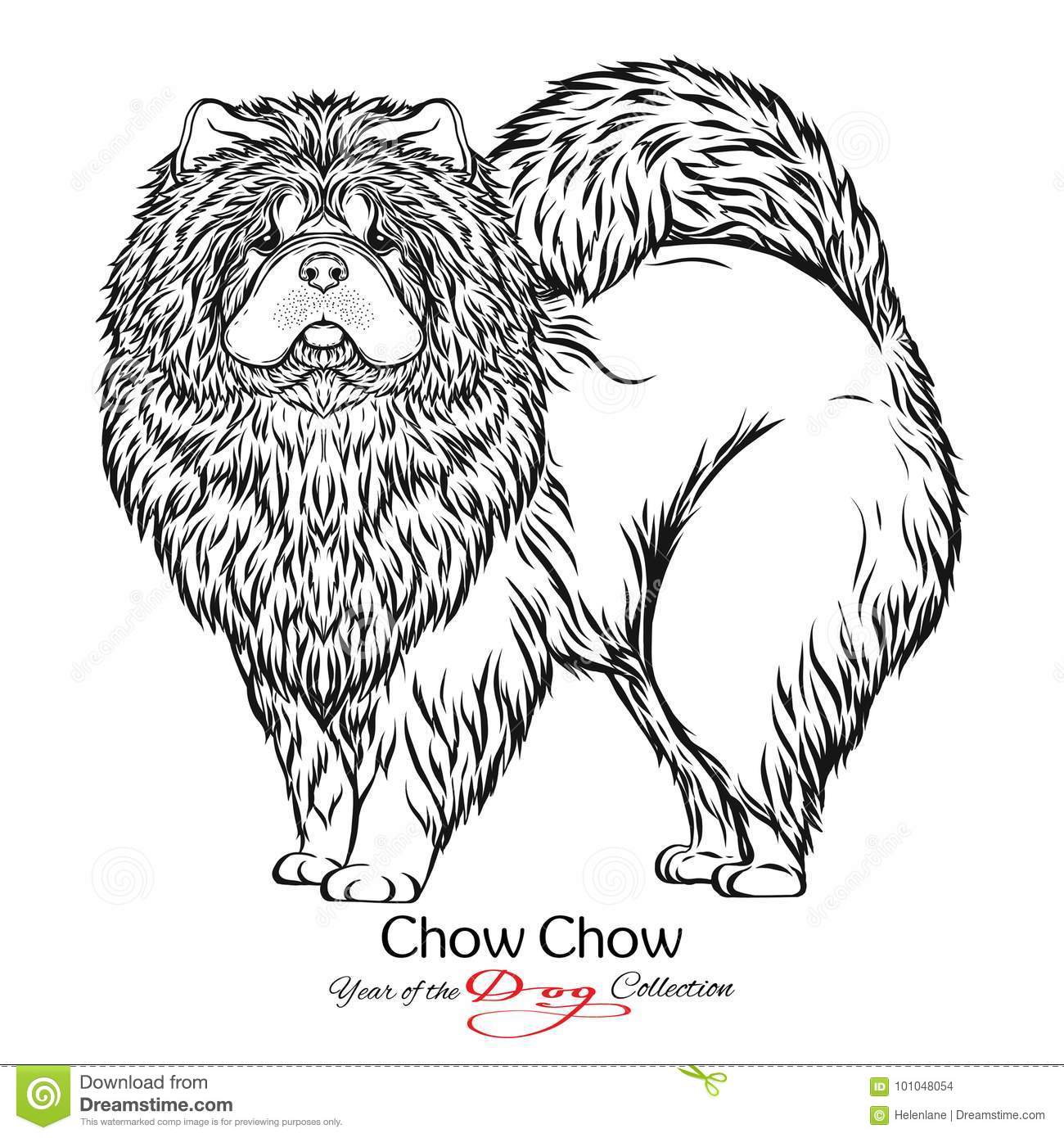 Chow Chow Black And White Graphic Drawing Of A Dog Stock Vector
