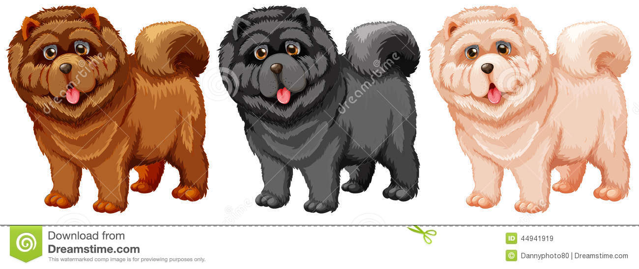 Chow Chow Stock Vector Illustration Of Collection Living 44941919