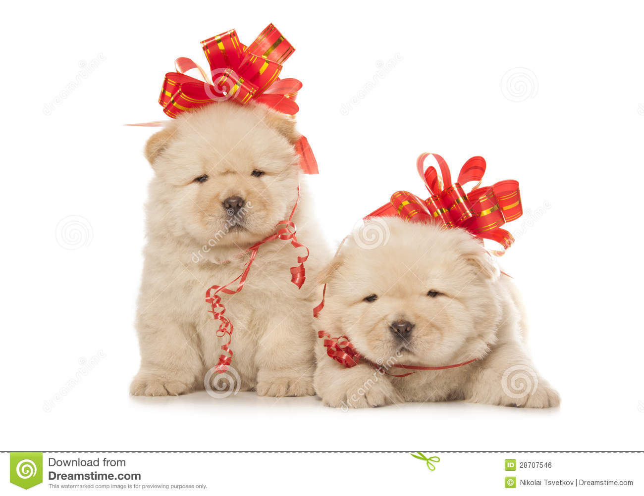 Chow Chow Puppies With Big Red Bows Stock Photo Image Of Chow