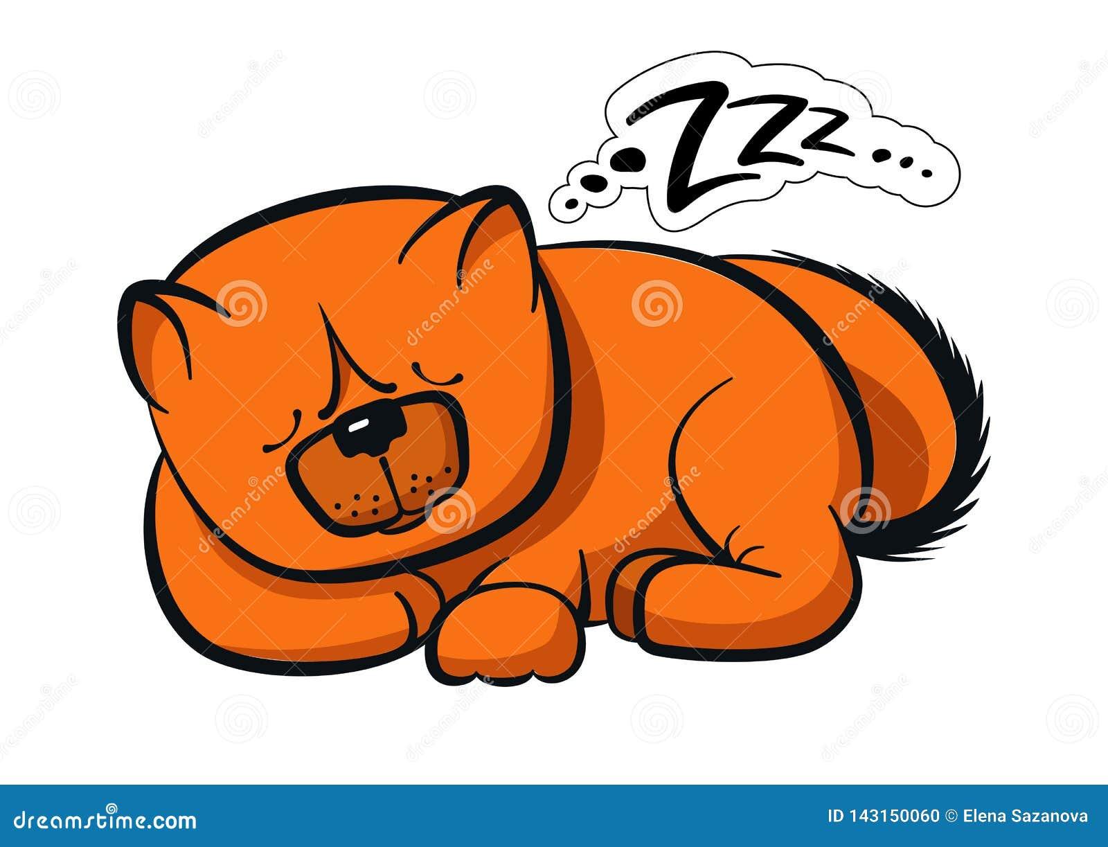Chow-chow del cane di sonno