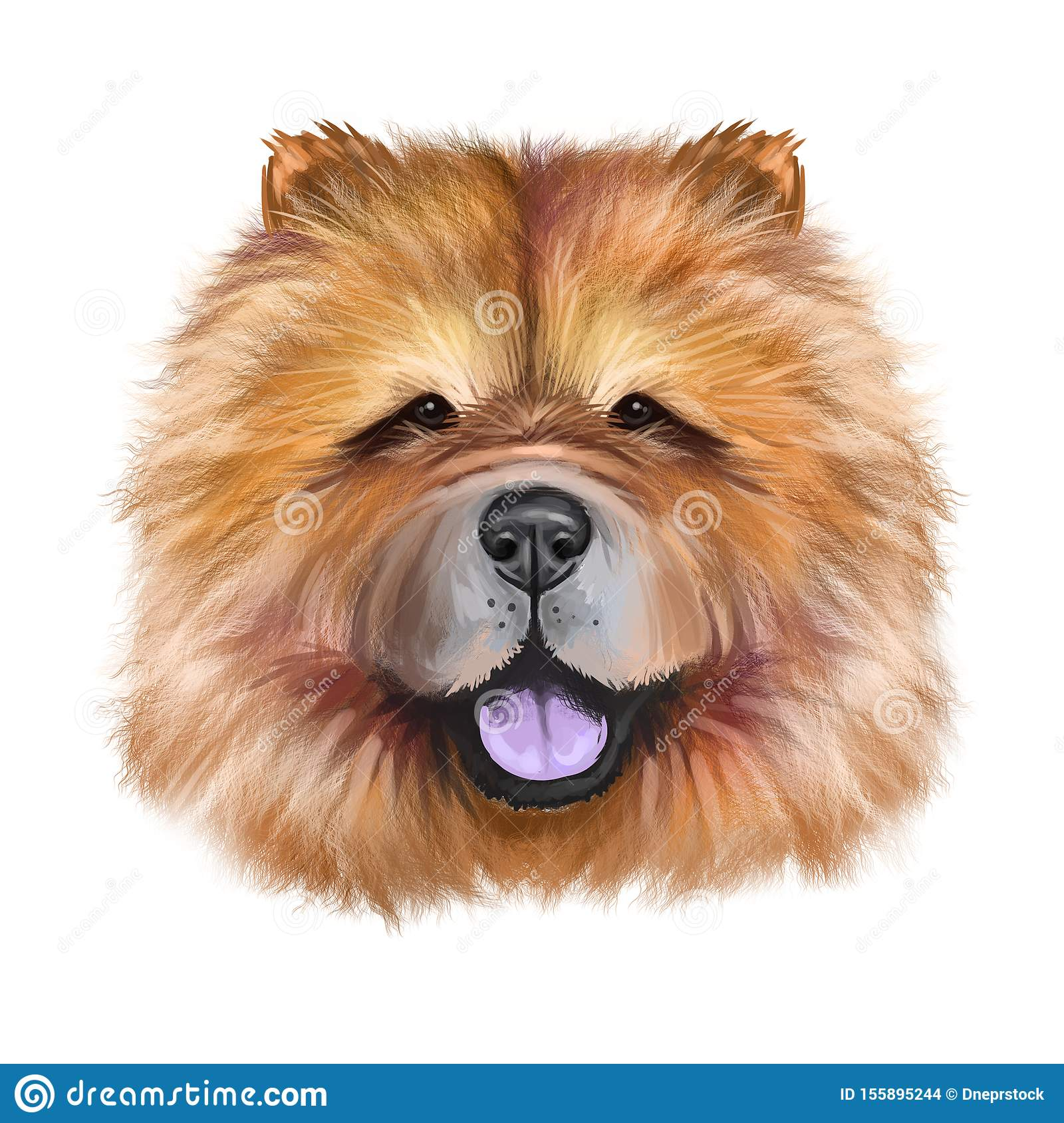 Chow Chow dog breed isolated on white background digital art illustration. Cute pet hand drawn portrait. Graphic clipart design