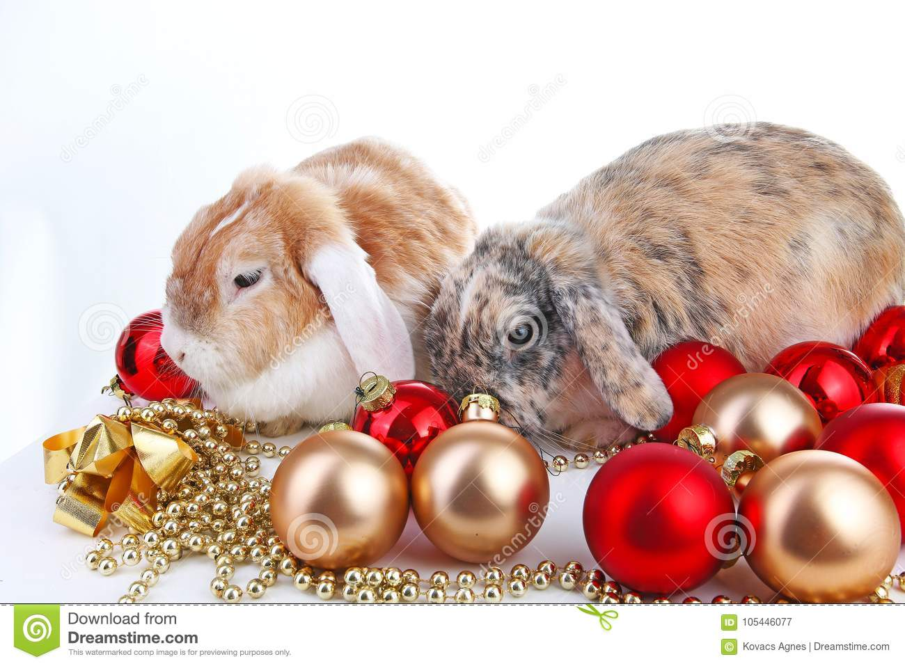 Christmas Animals Cut Lop Eared Rabbit Pet Friends On White