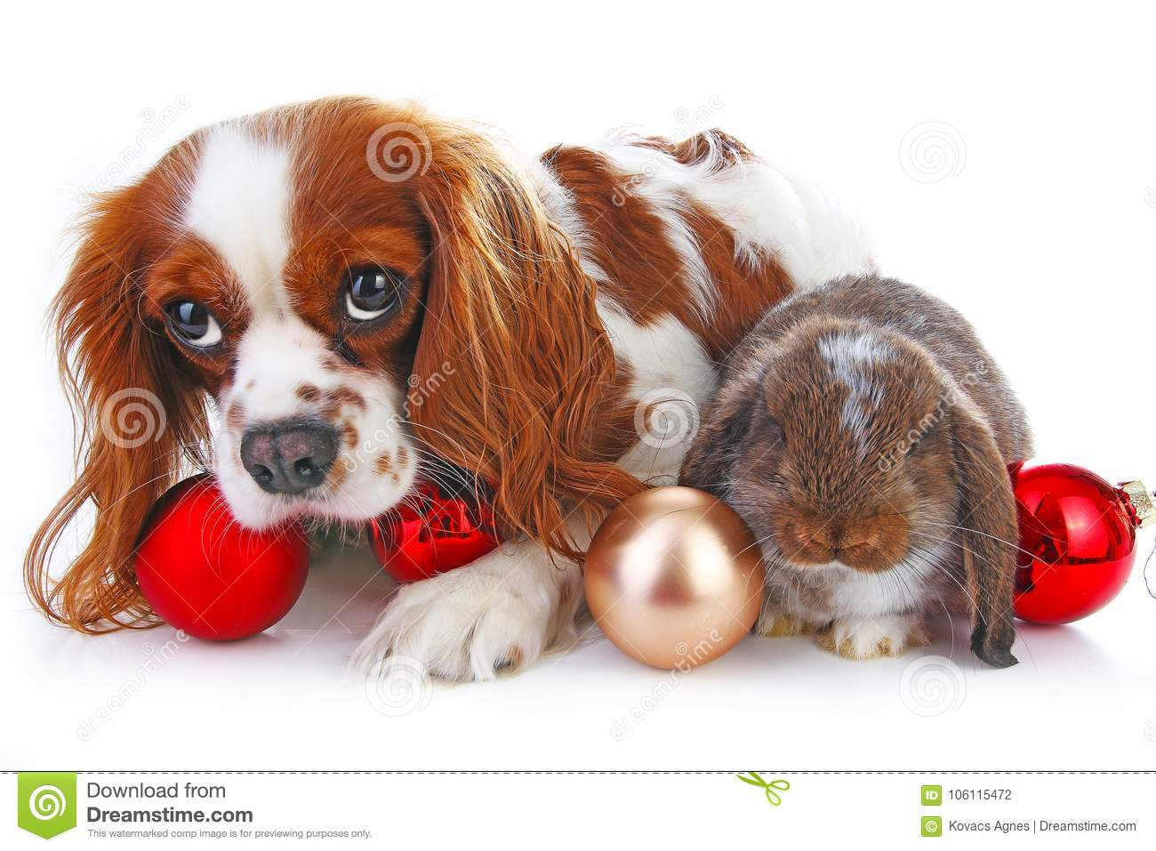 Christmas animals. Cute christmas rabbit. Rabbit bunny lop celebrate christmas with xmas bauble ornaments on isolated