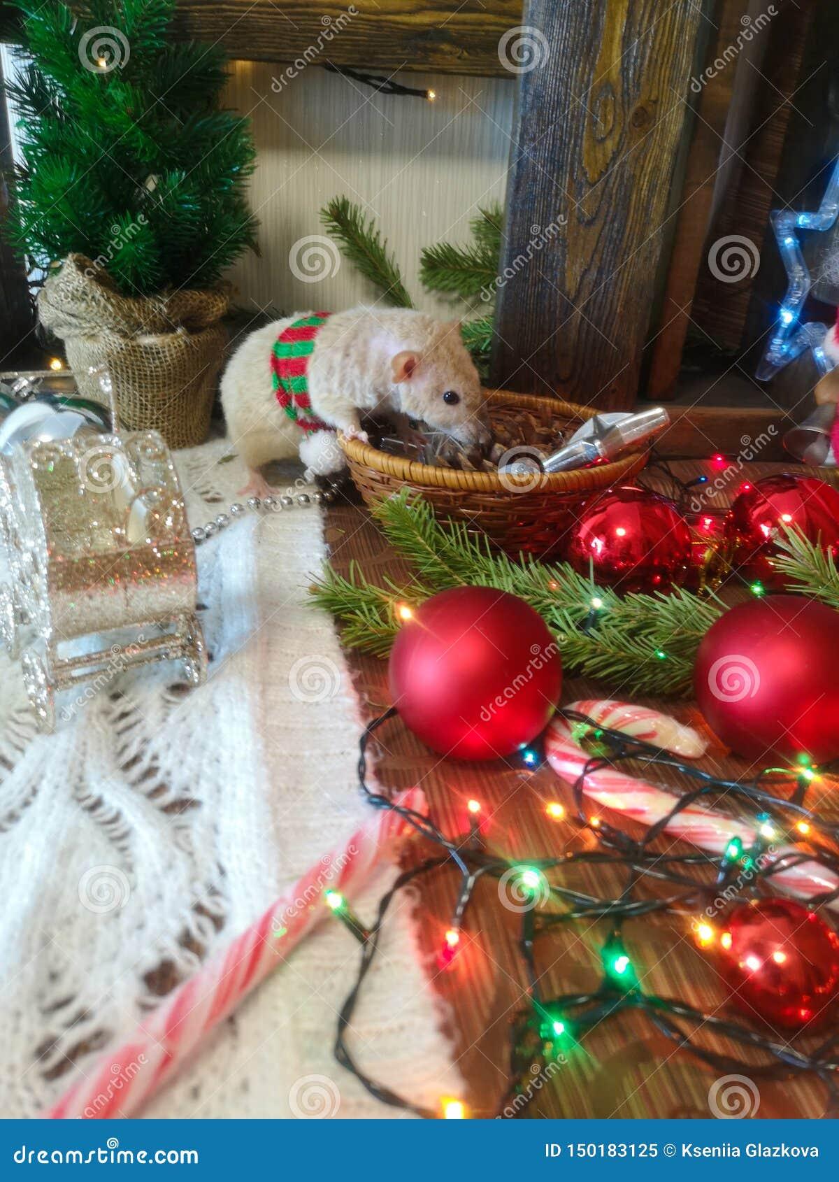 Christmas Animals. Mouse With Christmas Toys. Stock Image