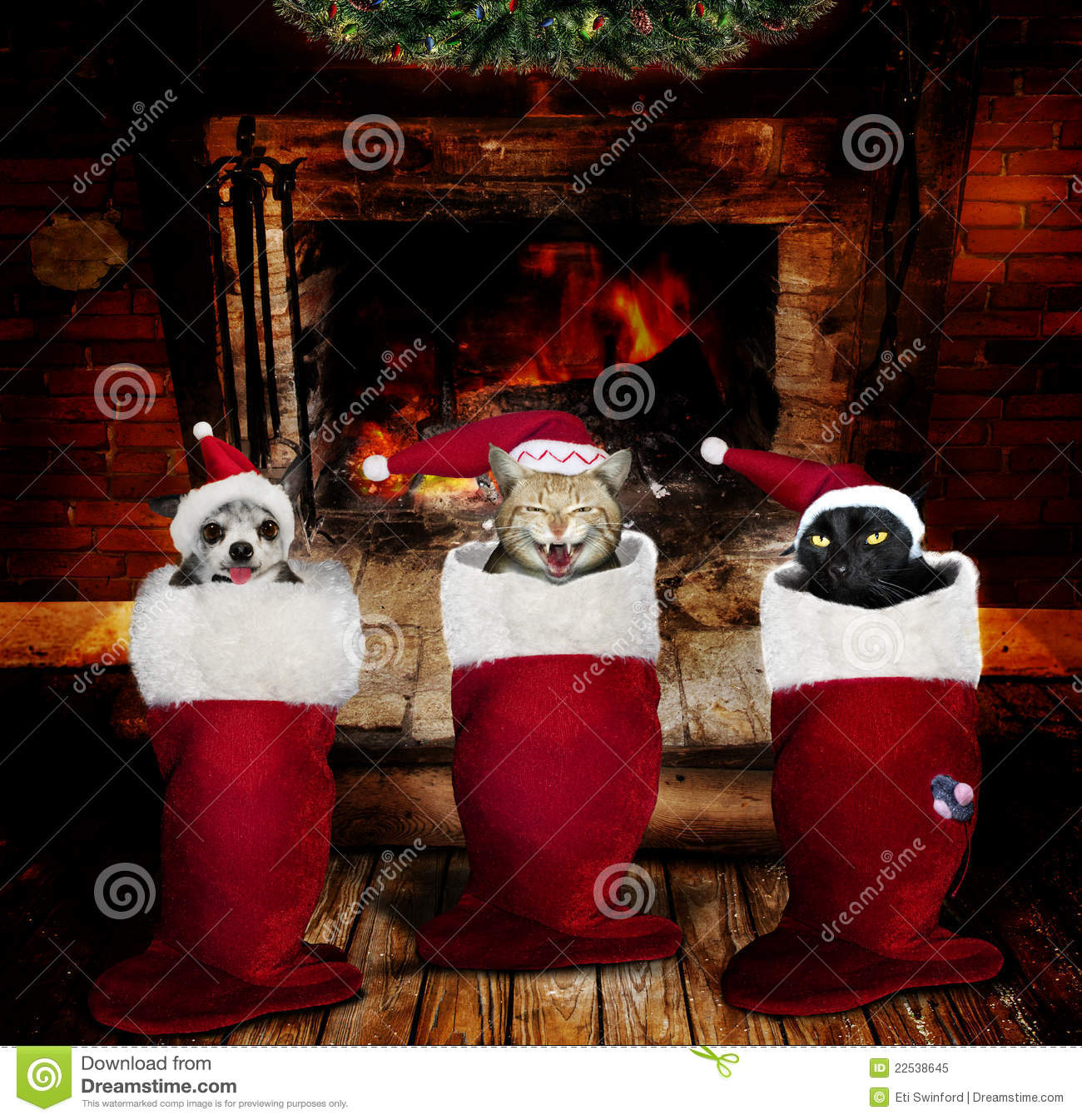 Christmas Animals In Stockings Stock Image Image Of Holiday Place