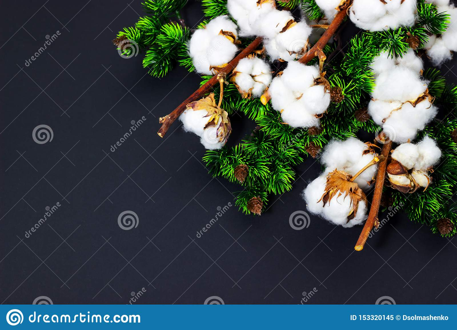 Christmas background with pine branches and cotton Space for text
