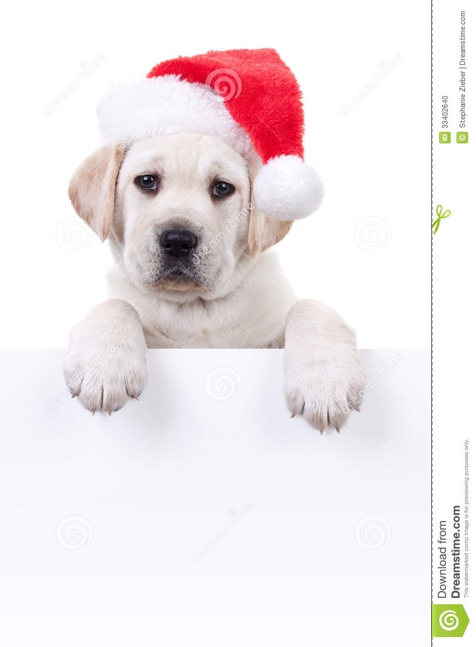 cute picture ideas for christmas cards - Christmas Banner Dog Stock Image