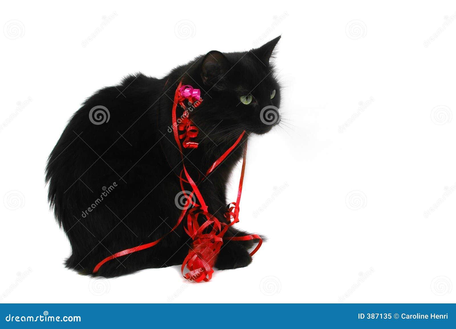 Christmas black cat gift stock image. Image of snow ...