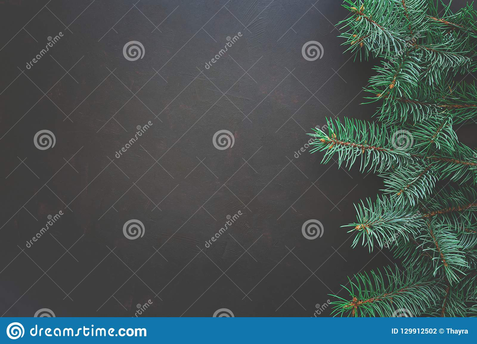 Christmas Border. Fir tree branches on dark wooden background. Top view. Copy space.