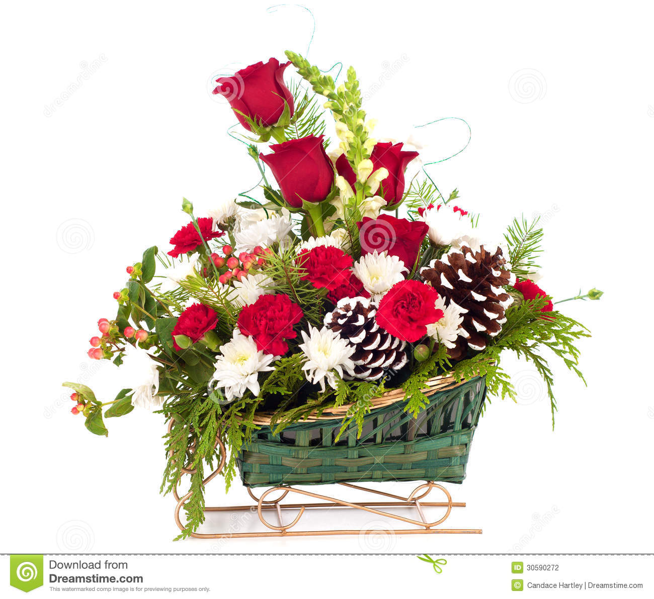 ... with pine cones all in a green sleigh basket with white background