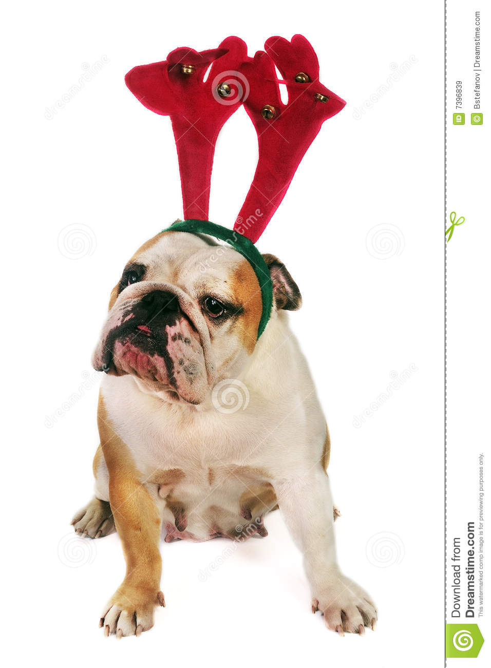 funny christmas bulldog - photo #9