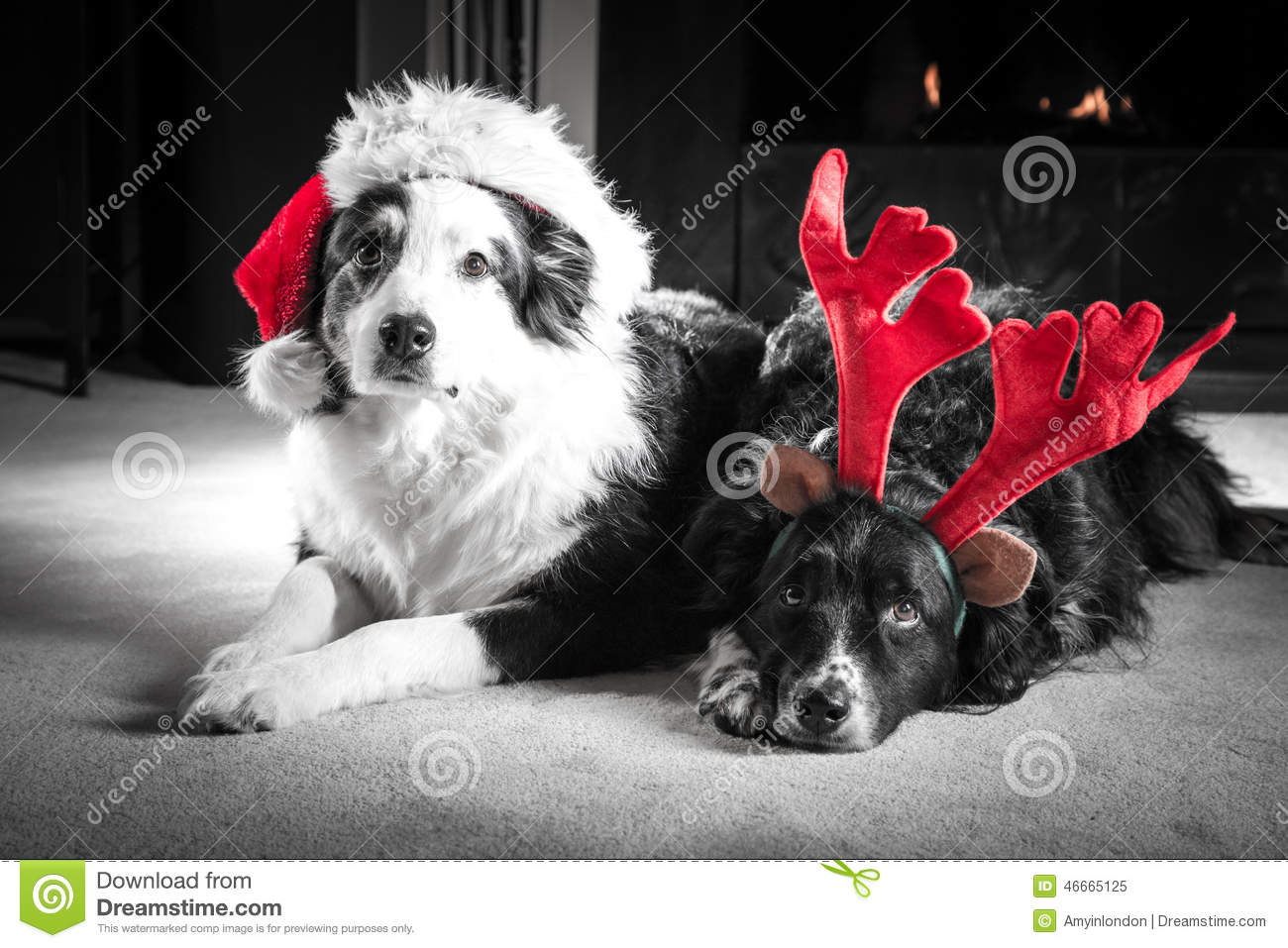 Christmas card dogs stock image. Image of patient, canine - 46665125