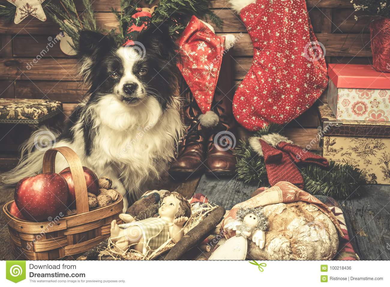 Baby Jesus And Cute Dog Xmas Cards Stock Photo - Image of claus ...
