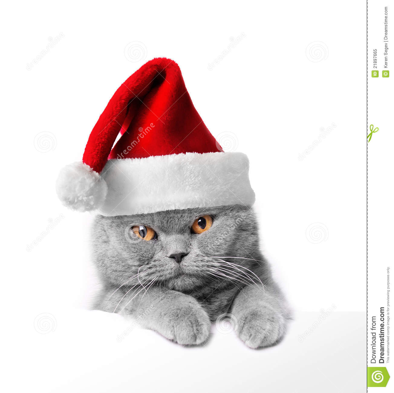 Christmas Cat Royalty Free Stock Photo - Image: 21897665