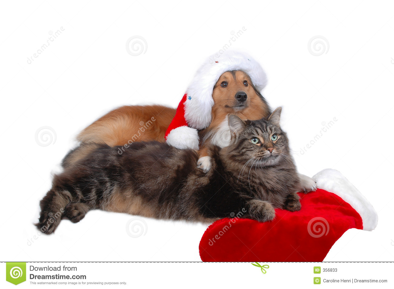 1 831 Christmas Cat Dog Photos Free Royalty Free Stock Photos From Dreamstime