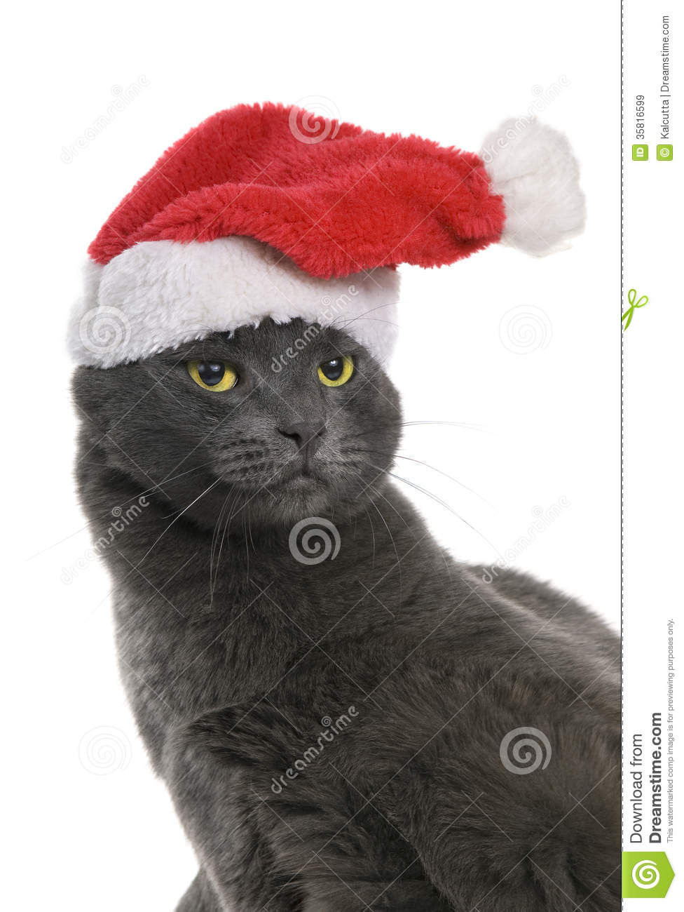 Fluffy White And Grey Cat Christmas Cat - Gray C...