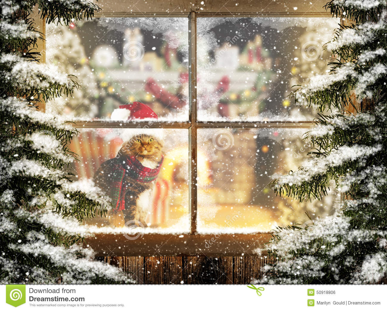 Download Christmas Cat Sitting At Window Stock Photo - Image of feline, marilyn: 50918806