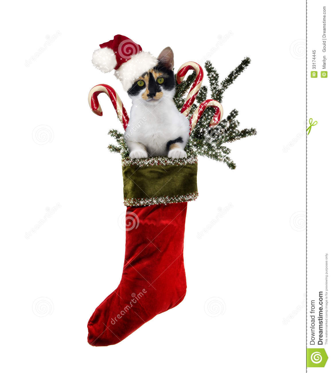 ... Christmas stocking stuffed with candy canes and Christmas greenery on
