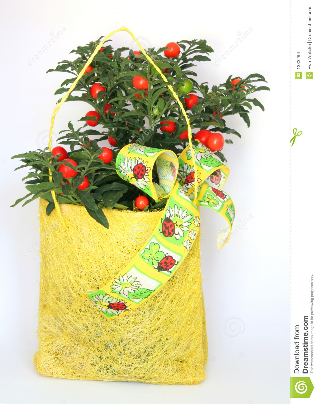 Christmas Cherry Plant Gift Stock Images - Image: 1333294