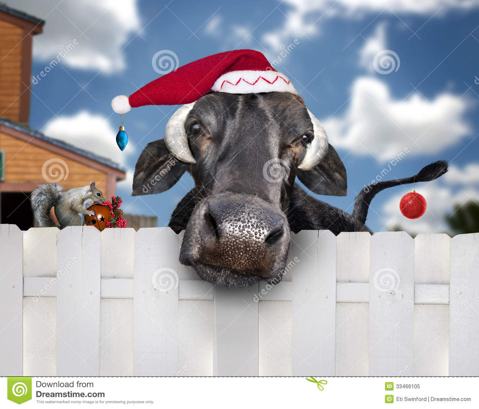 Christmas cow wearing santa hat