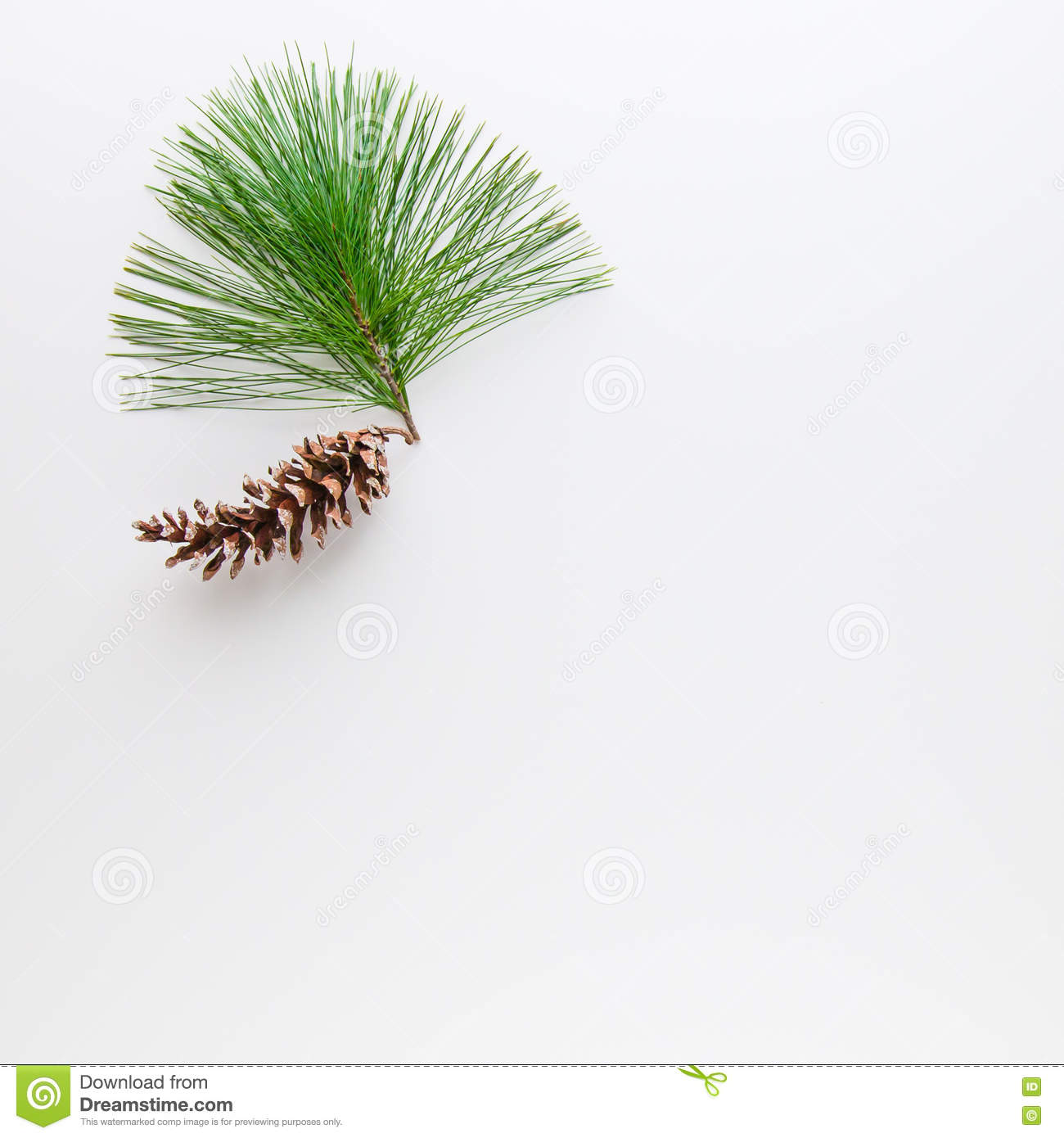 Christmas decoration composition of pine cone and branche on wh
