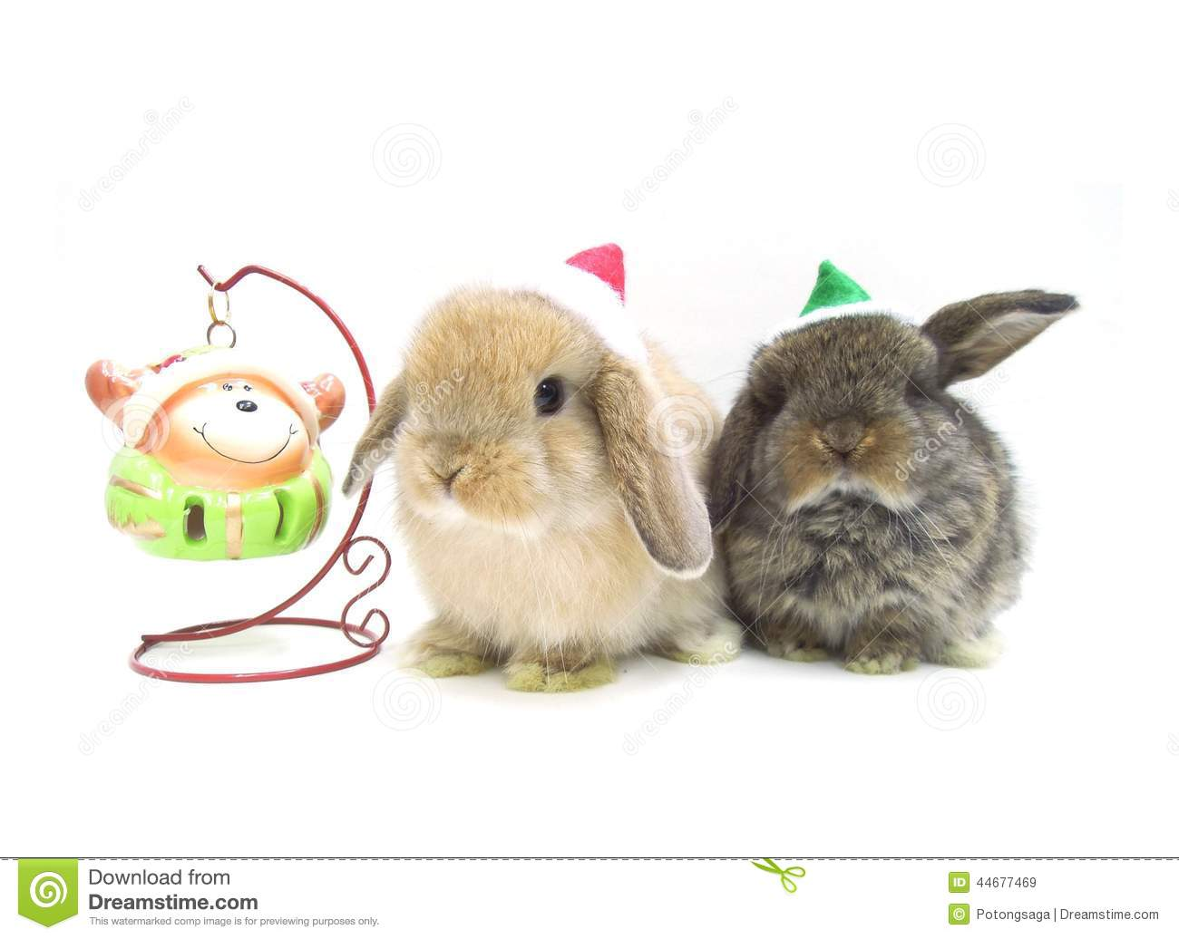 christmas decoration cute holland lop rabbits