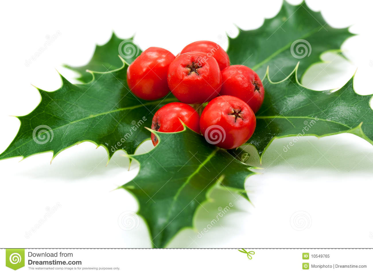 Christmas decoration with holly leaves and berries stock for Holl image