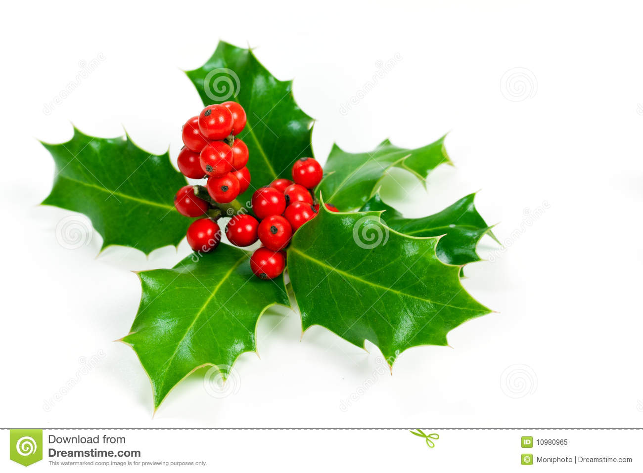 christmas decoration with holly leaves and berries royalty
