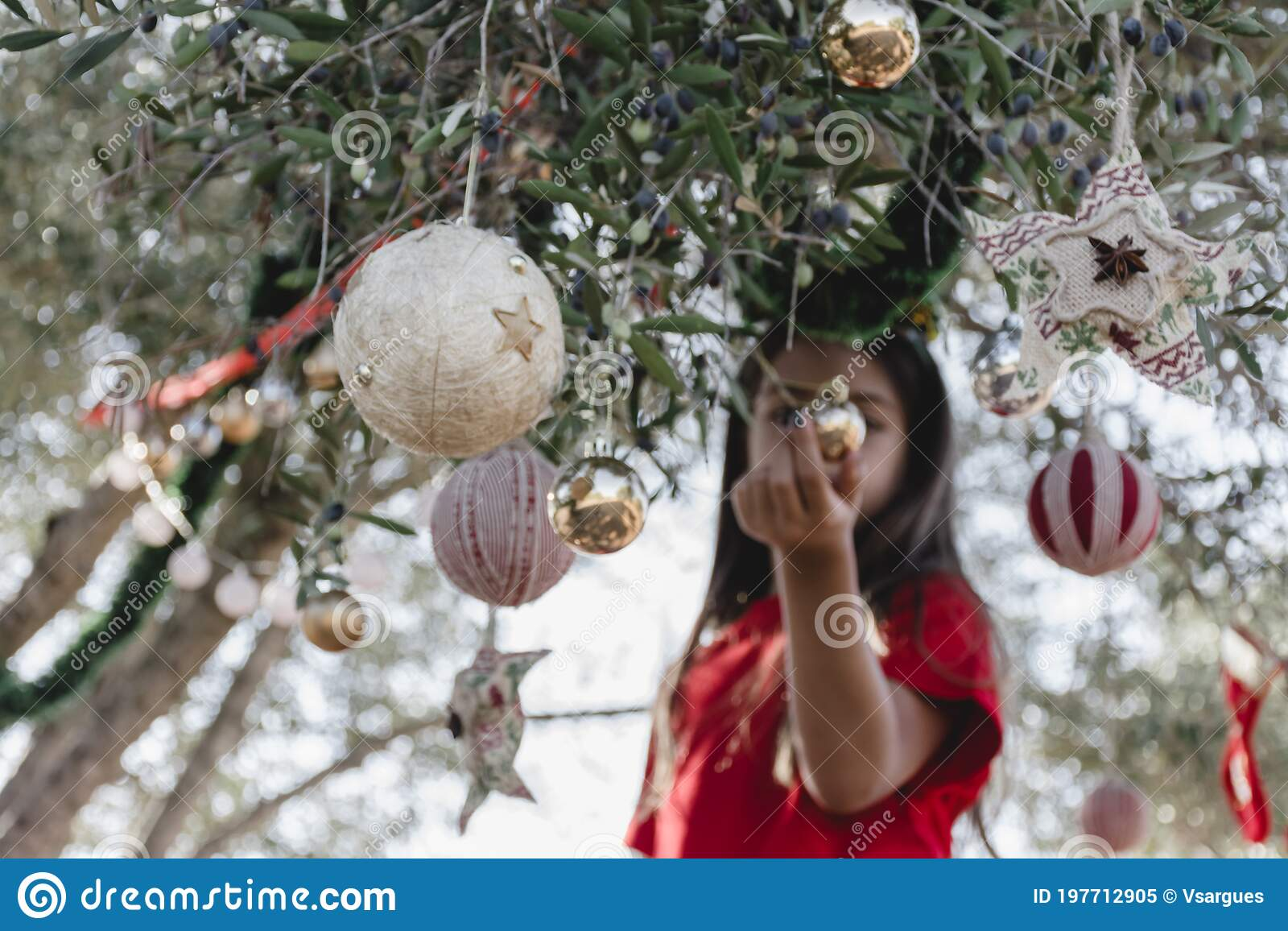 Christmas Decoration On An Olive Tree Stock Image Image Of Enjoyment Festive 197712905