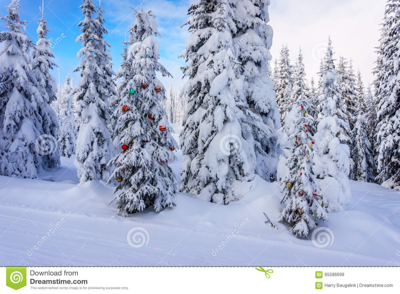 Christmas Decoration On Snow Covered Pine Trees In The