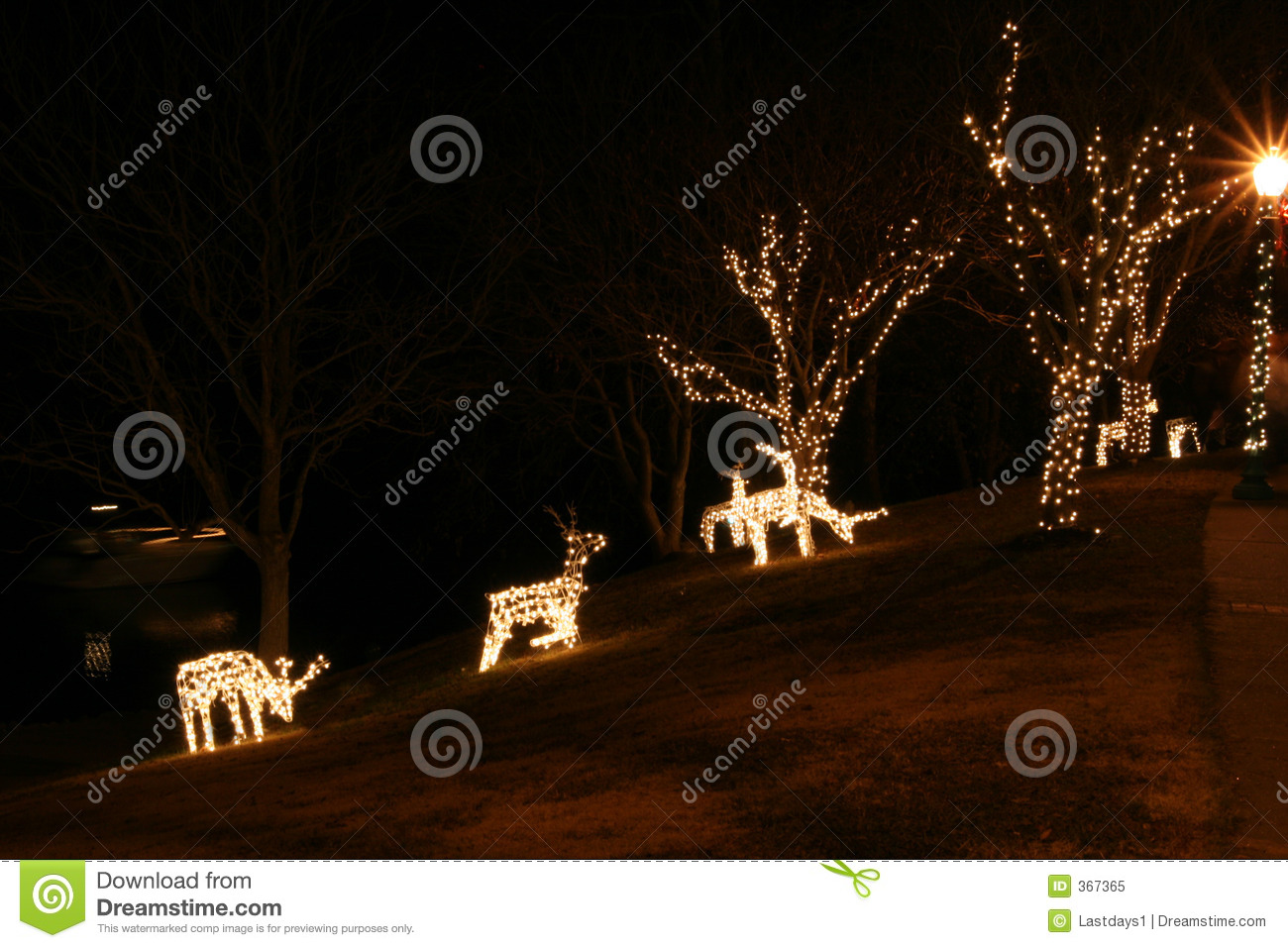 Christmas Lights In Trees Outdoors