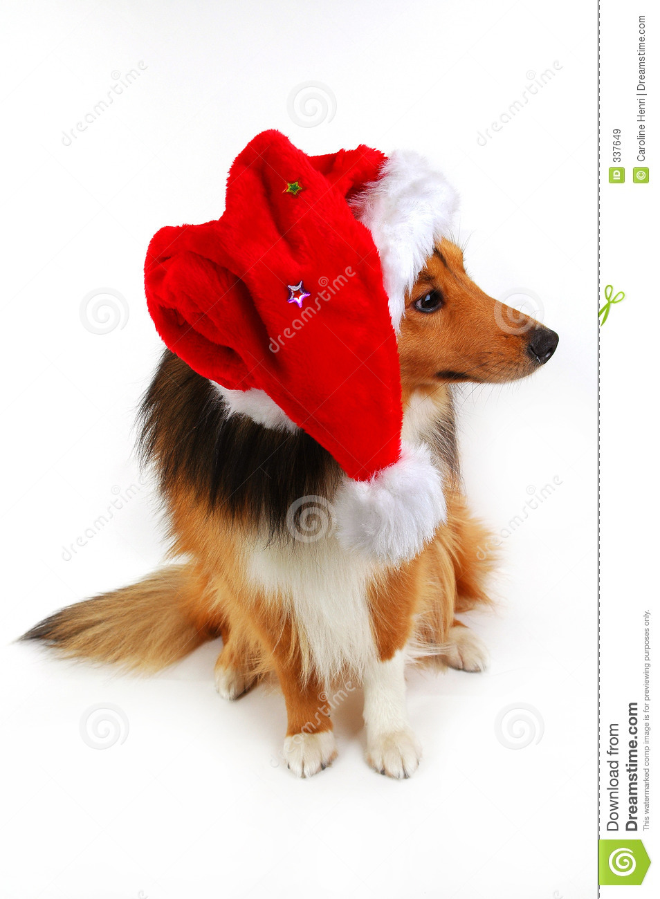 how to fly your dog on plane at christmas