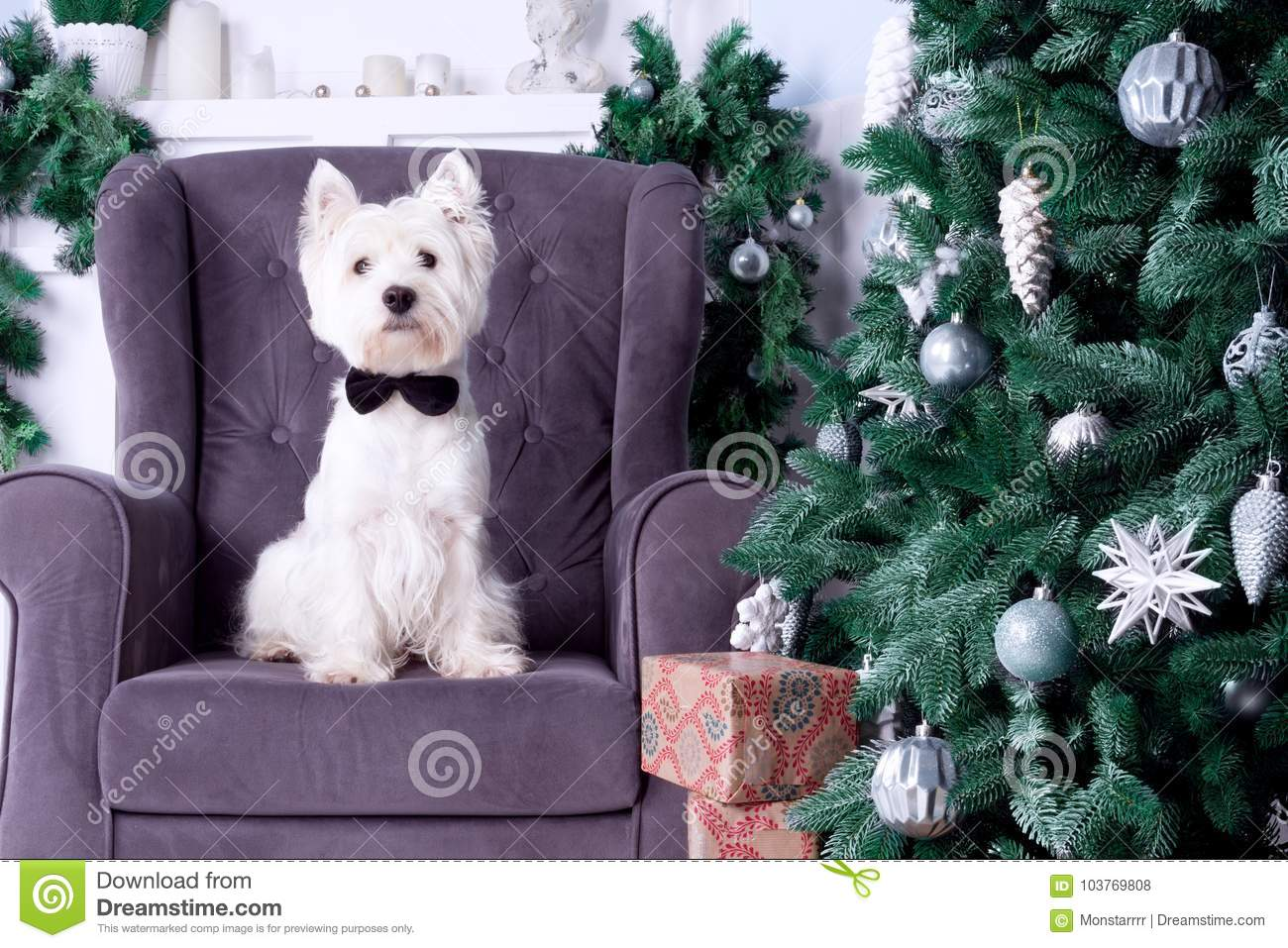 Christmas Dog as symbol of new year