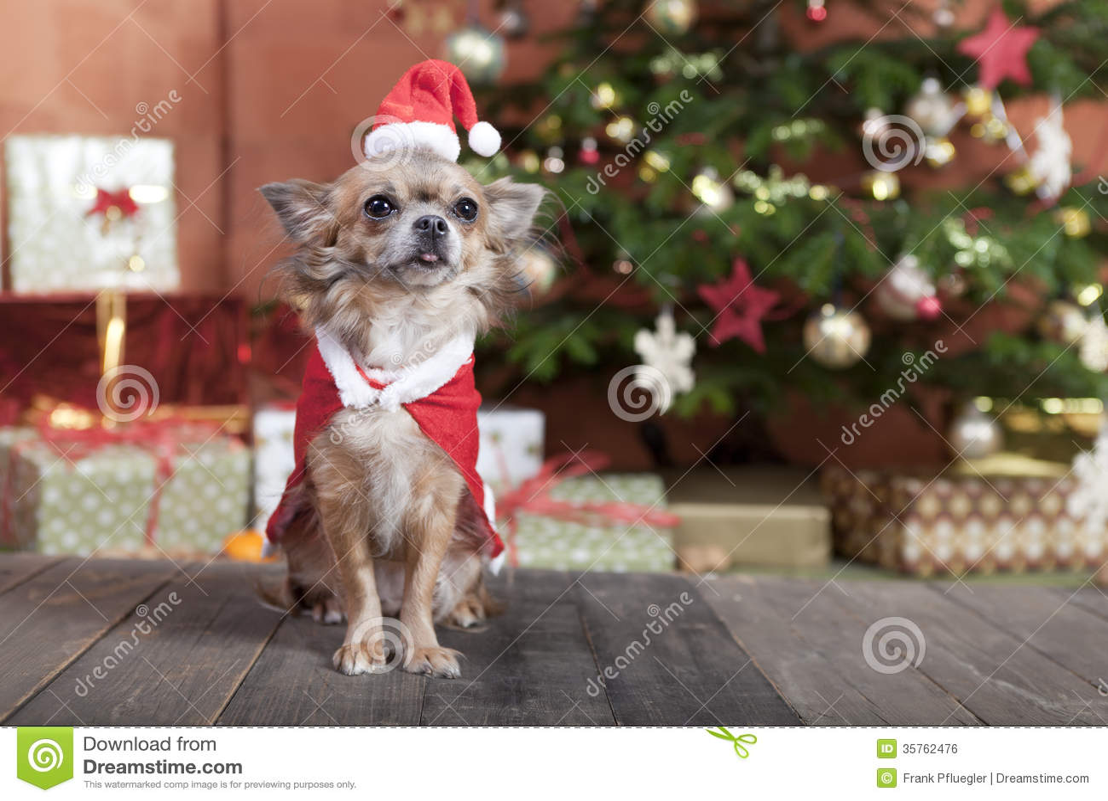 Christmas Dog Before Christmas Tree Royalty Free Stock Image ...