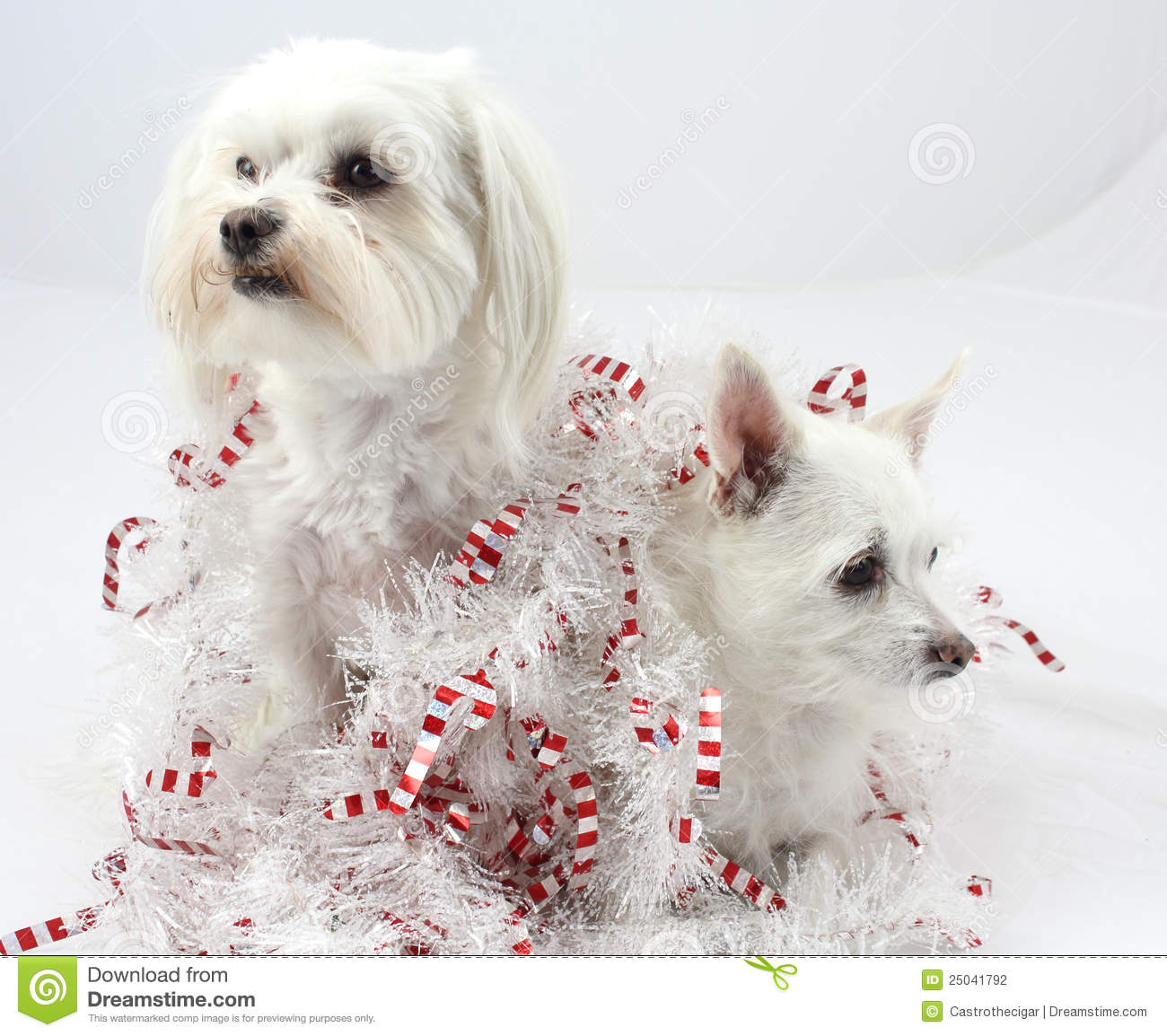 Christmas Dog Decorations Stock Photography - Image: 25041792