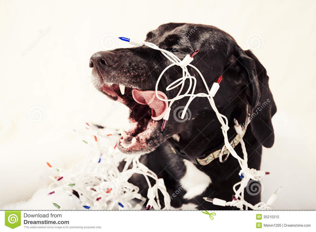 Christmas Dog Stock Photo Image Of Colors Looking Puppy