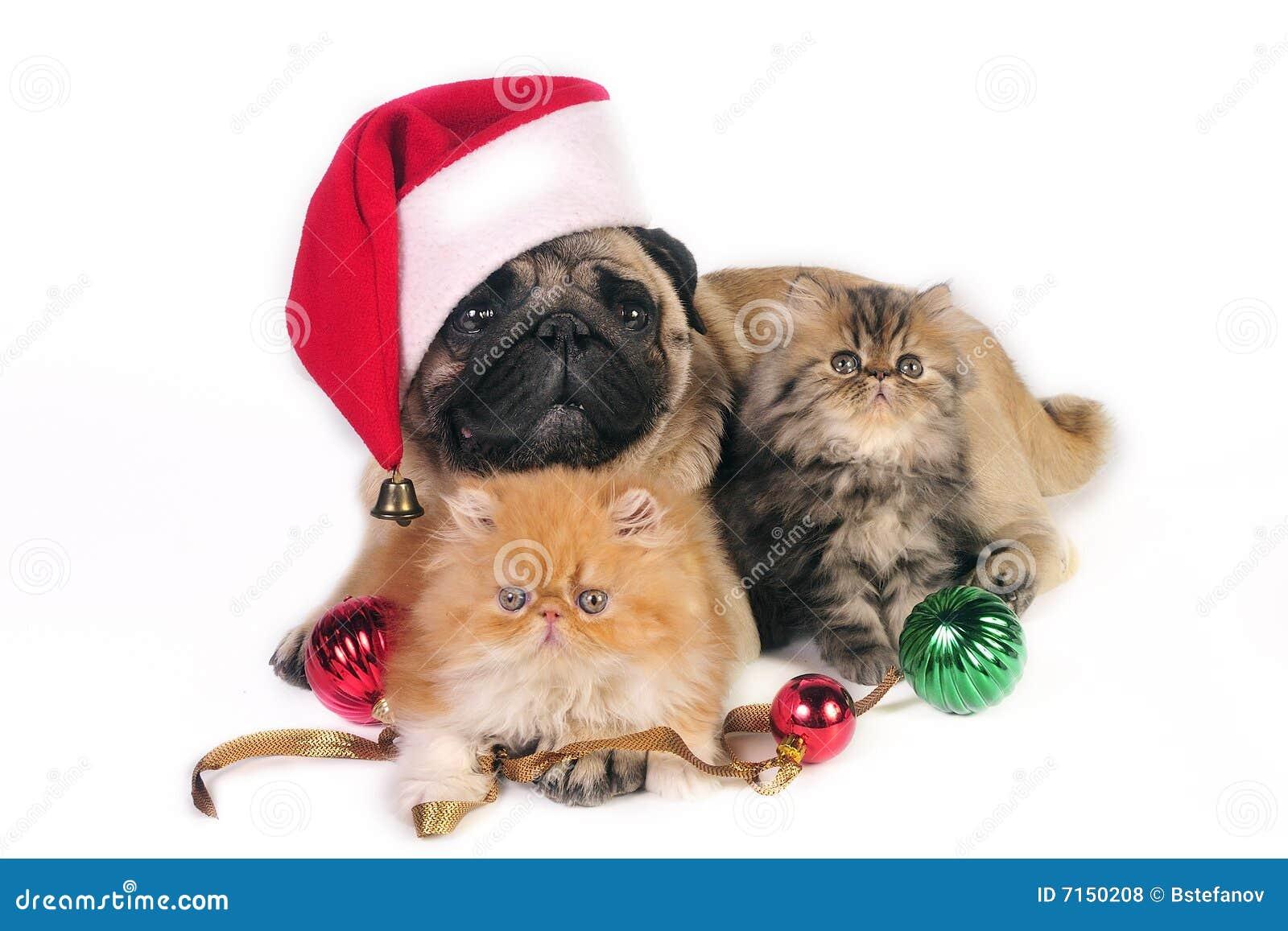 christmas dog and kittens stock photo image of santa 7150208
