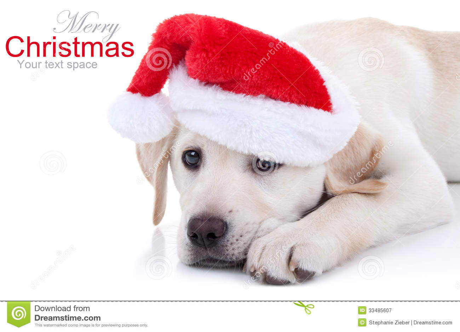 Christmas Dog Royalty Free Stock Photography Image 33485607