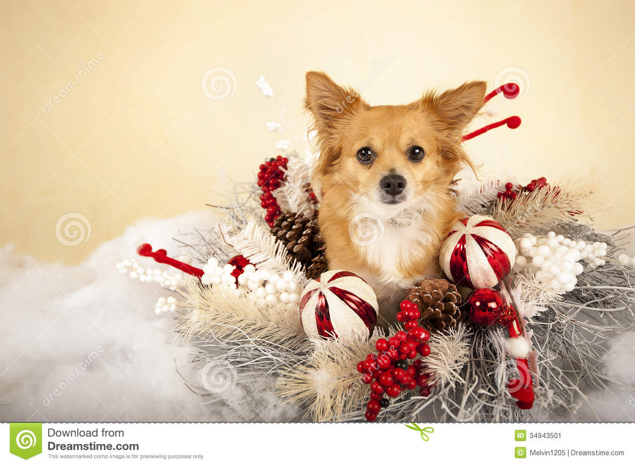 Cute Christmas Card Pictures With Dogs