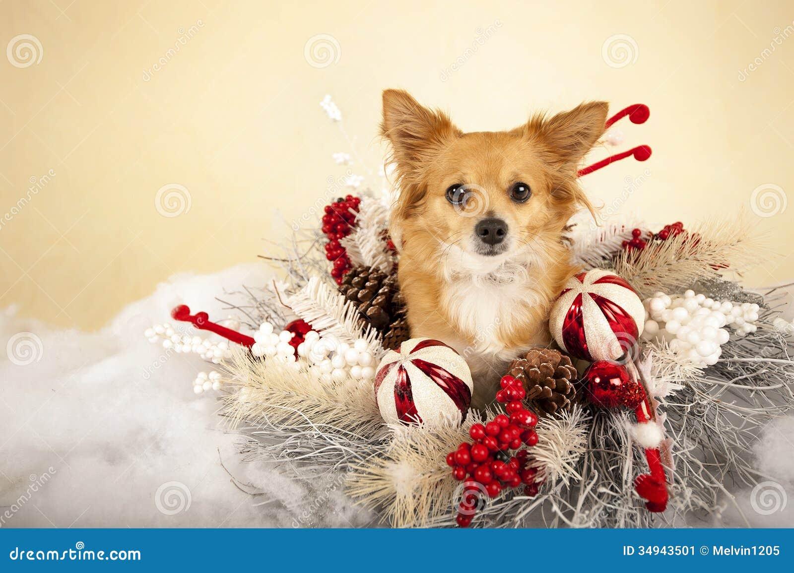 Christmas Wreath Ideas Christmas Dog Stock Image Image 34943501