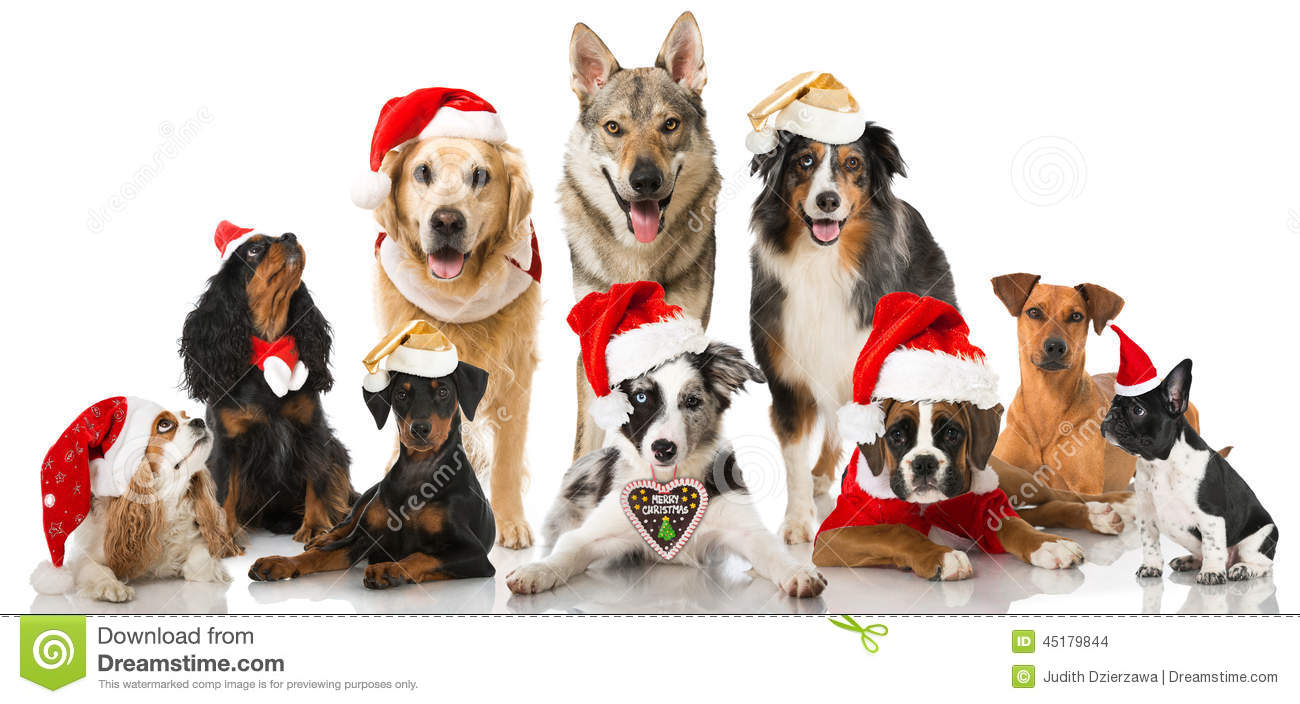Christmas Cards With Cats And Dogs