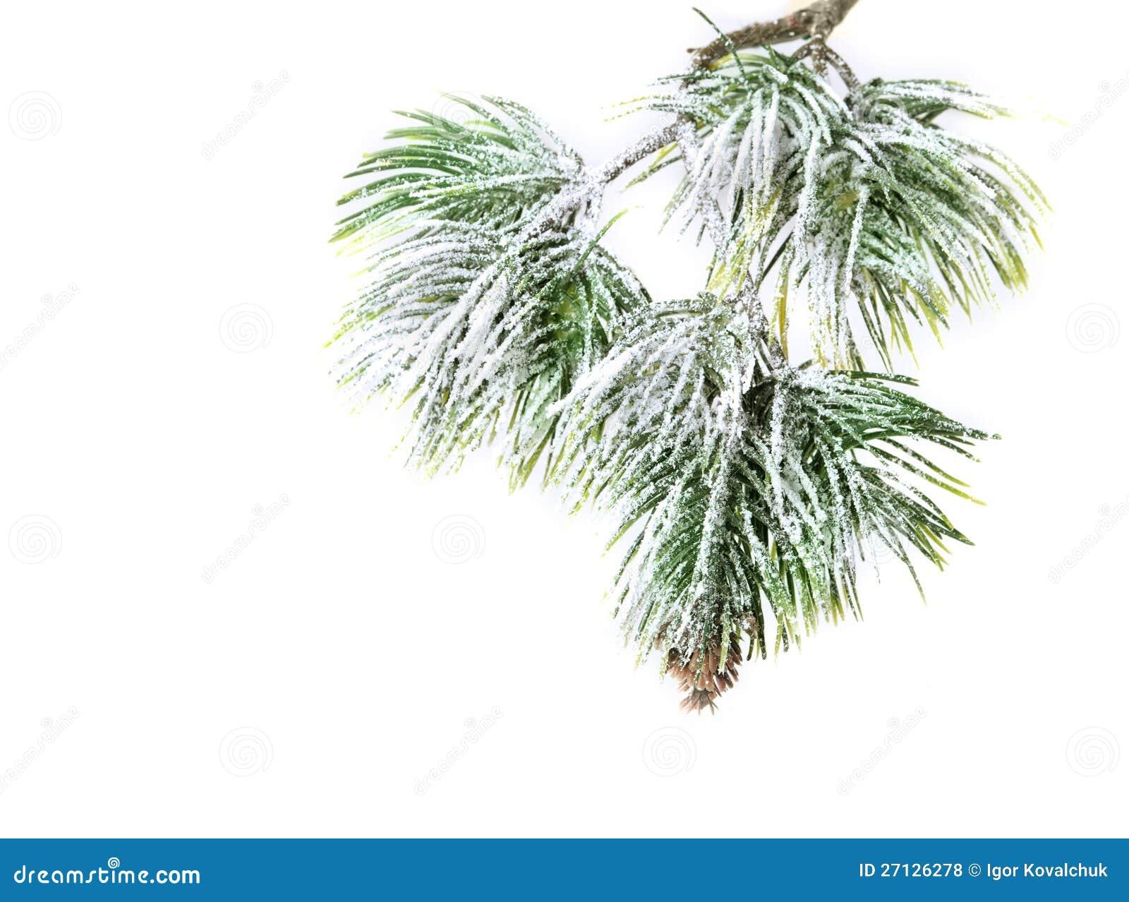 christmas evergreen spruce tree - photo #3